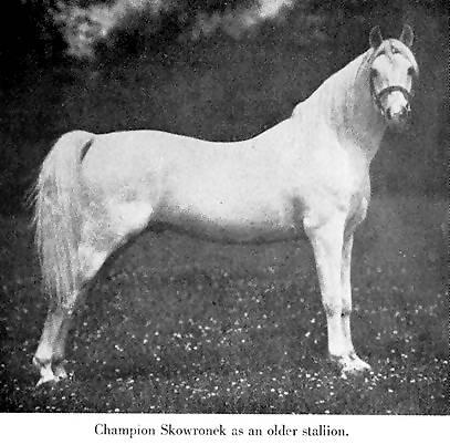 Skowronek15